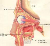 鼻窦炎存在哪些危害