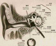 造成耳聋的原因是什么